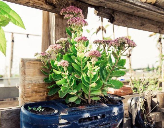 urban-gardening-1679950_960_720